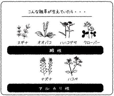 pH確認方法