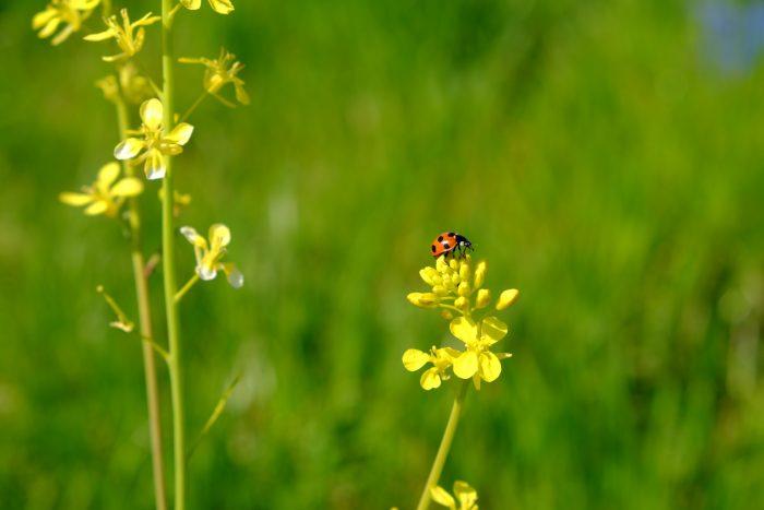 お庭にいたら見守りたい虫たち