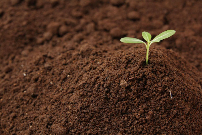 オーガニックなお庭づくりは環境づくりからはじめよう!